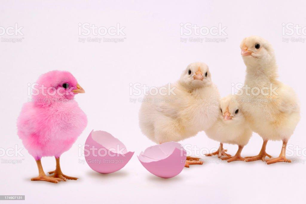 Easter Egg Chick stock photo