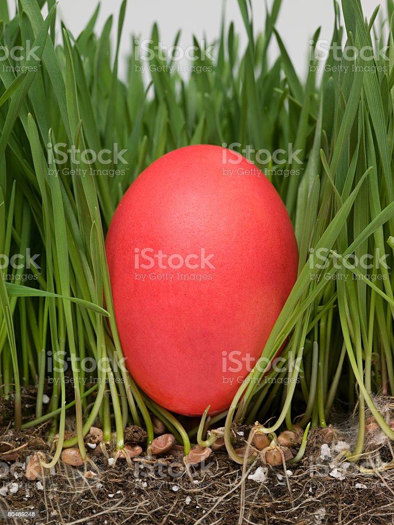 イースター卵の芝生 ロイヤリティフリーストックフォト