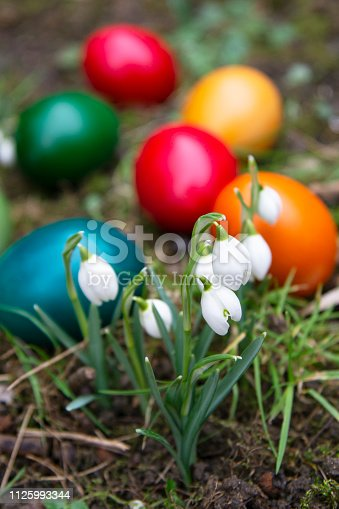 Easter egg meadow snowdrop snowflake outside in the meadow
