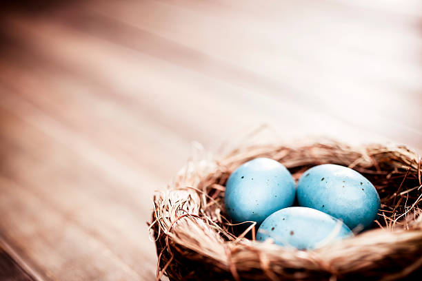 Easter Egg Nest on Vintage Wood - Season Backgrounds Easter Egg Nest on Vintage Wood nest egg stock pictures, royalty-free photos & images