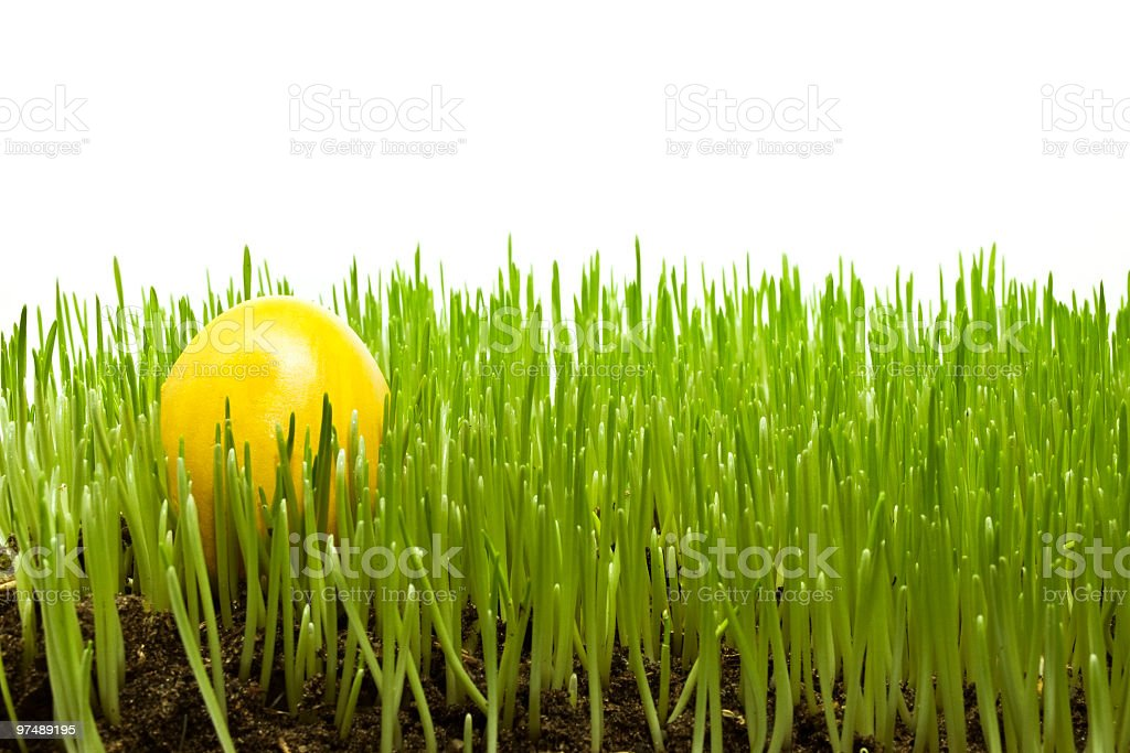 easter egg on a green grass royalty-free stock photo