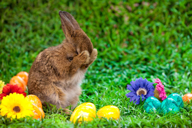 easter egg - easter bunny stock photos and pictures