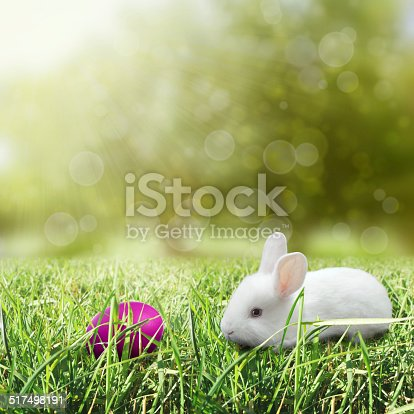 930928526 istock photo Easter egg with bunny 517498191