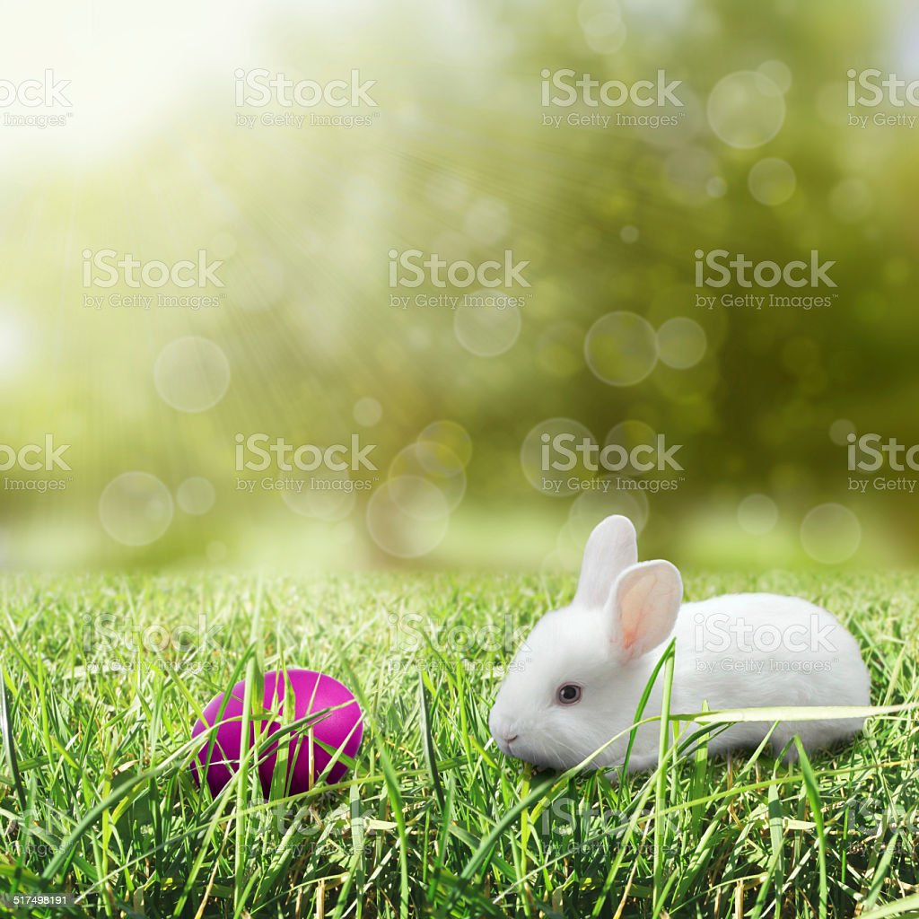 Easter egg with bunny stock photo