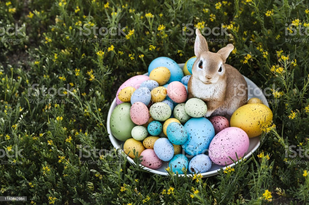 Easter eggs and bunny outdoor with green grass as a background and copy space on the left stock photo