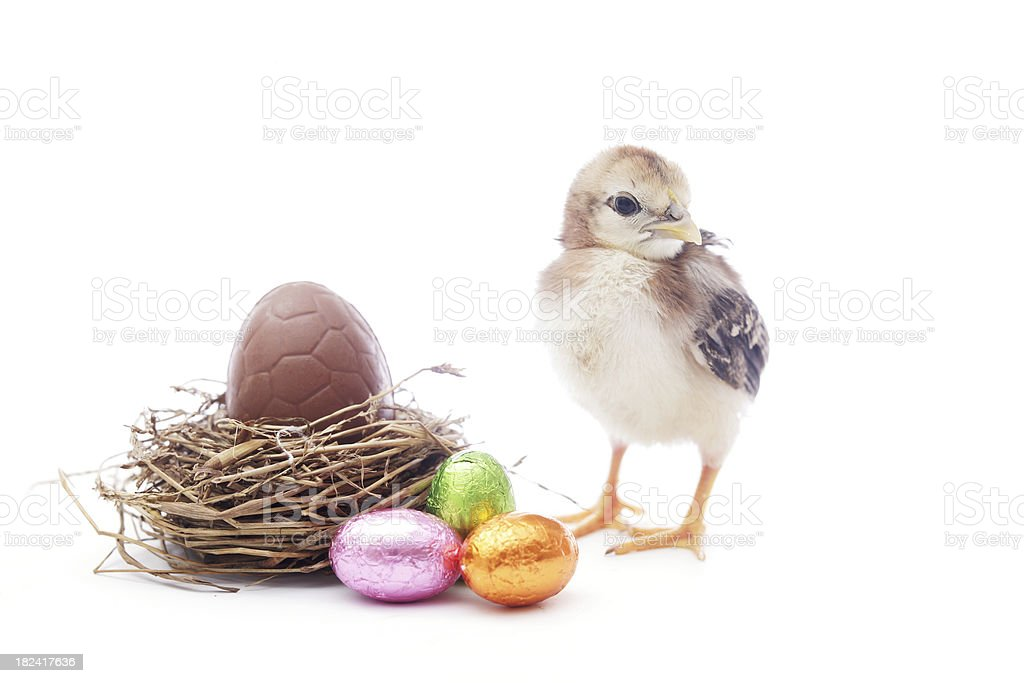 Easter eggs and chick stock photo