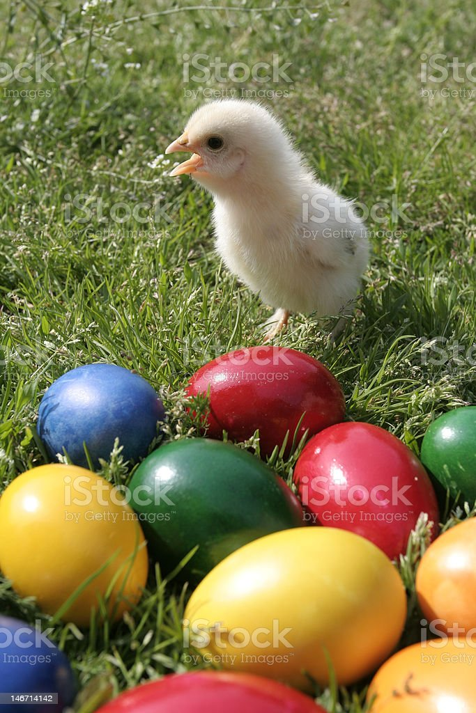 Easter eggs and chicken stock photo