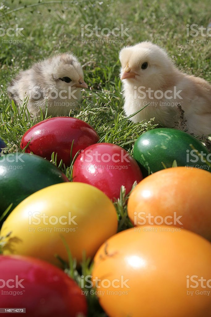 Easter eggs and chickens stock photo