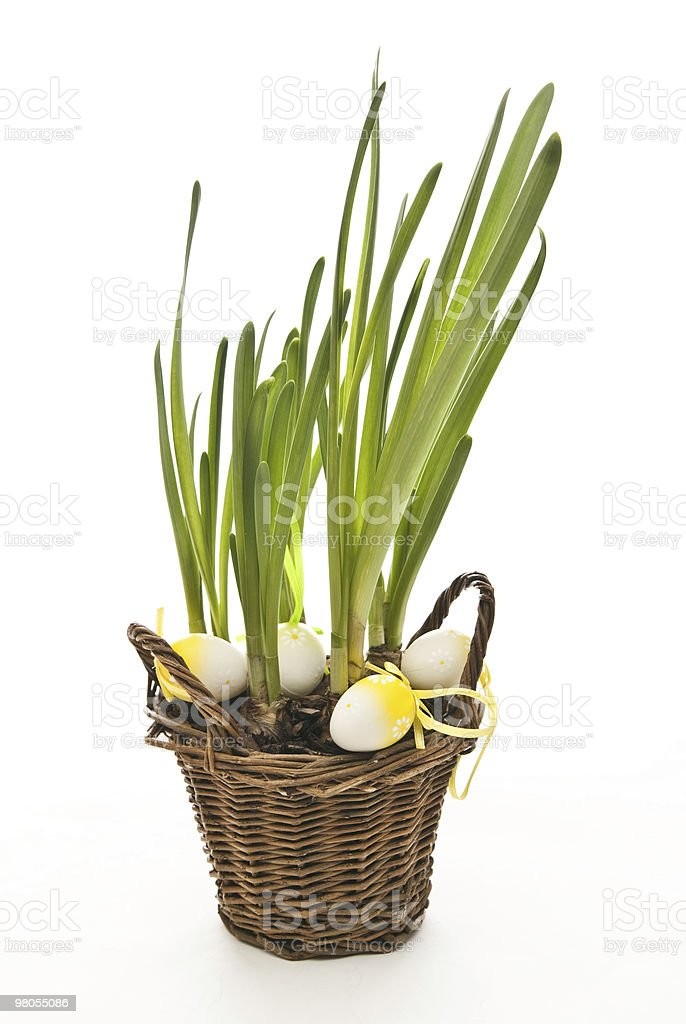 easter eggs and plant royalty-free stock photo