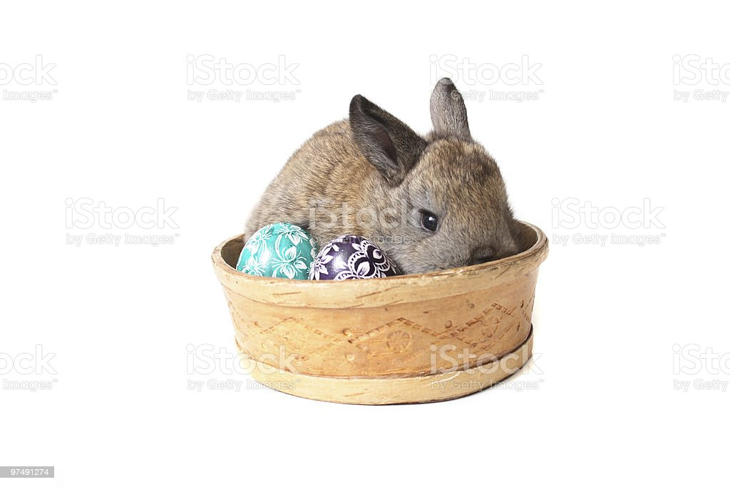 easter eggs and rabbit royalty-free stock photo