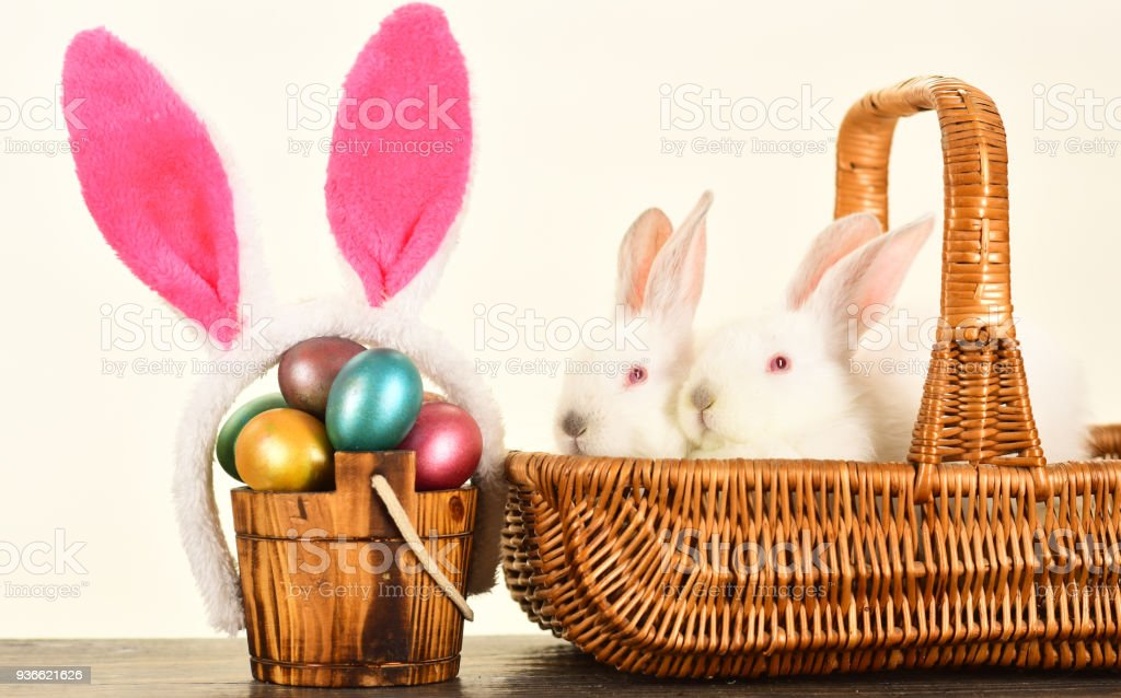 Easter Eggs Family Cute Bunny With Funny Bunny Ears Easter Egg Ideas