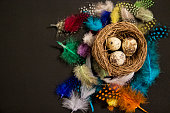 Easter Eggs in a nest on a black background,  copy space.