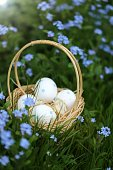 Easter eggs in a wicker basket in blue flowers of forget-me-not on a blurred vegetable background.Spring Easter festive background.