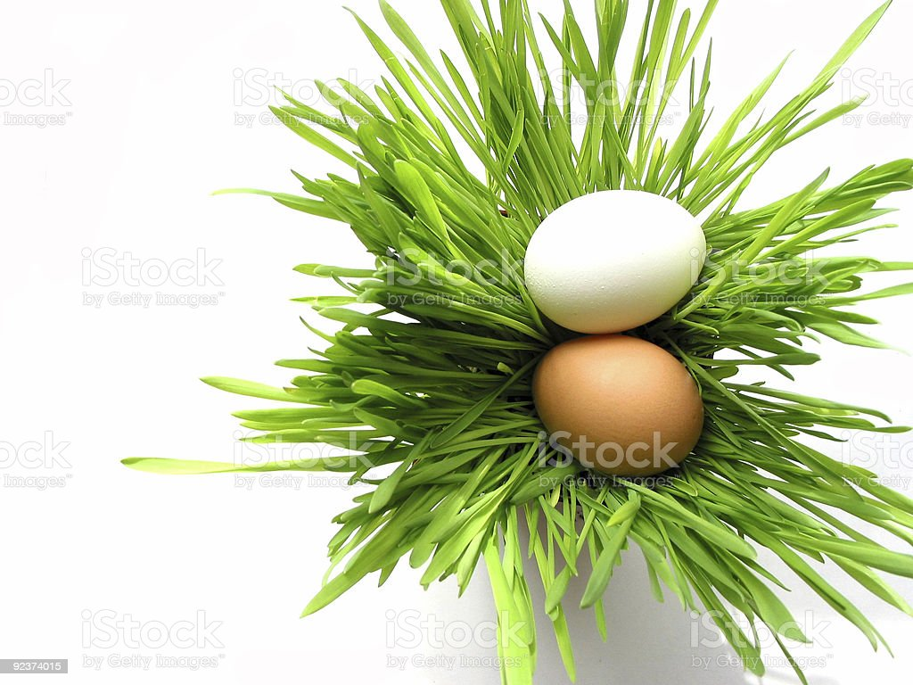Easter eggs in grass on white royalty-free stock photo