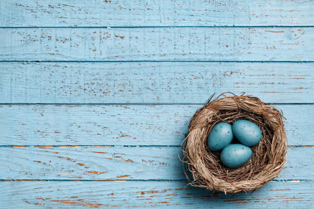 Easter eggs in nest on blue old planks  - Backgrounds Spring Season Wood stock photo