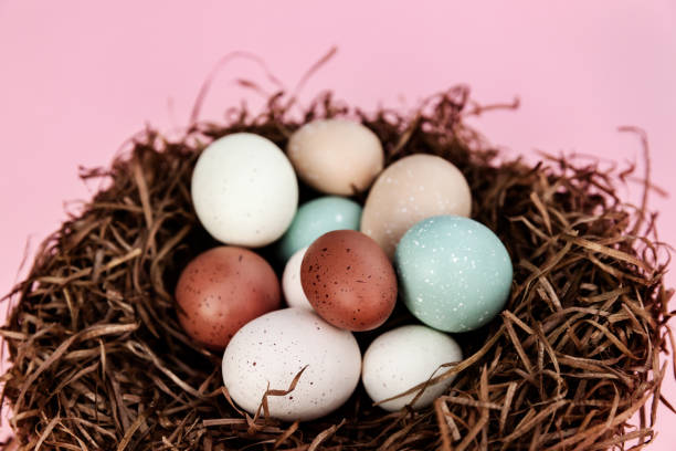 Easter eggs in the nest against pink background, season holiday pattern, traditional decoration stock photo