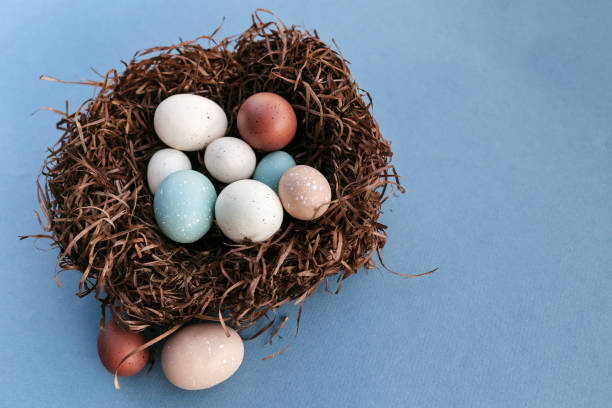Easter eggs in the nest on blue background with copy space on the right stock photo