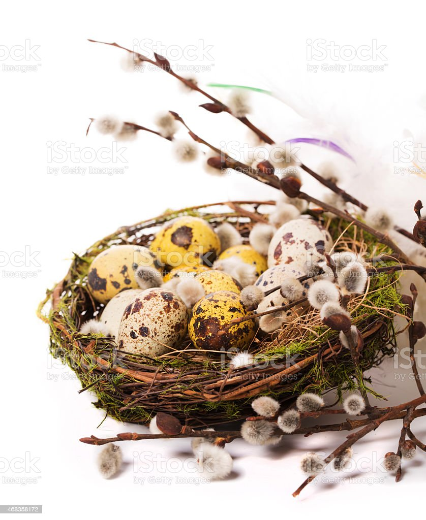Easter eggs in the nest with narcissus royalty-free stock photo