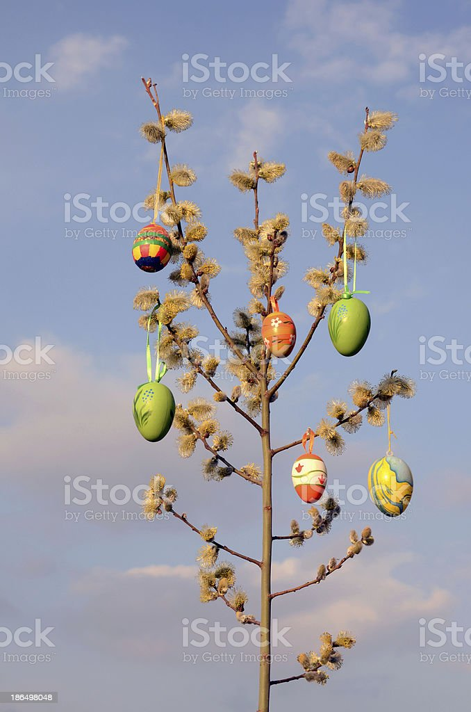 Easter eggs on spring  willow tree royalty-free stock photo