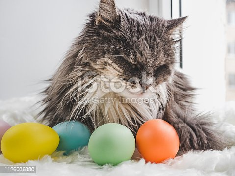 istock Easter eggs painted in bright colors and a charming kitten 1126036380
