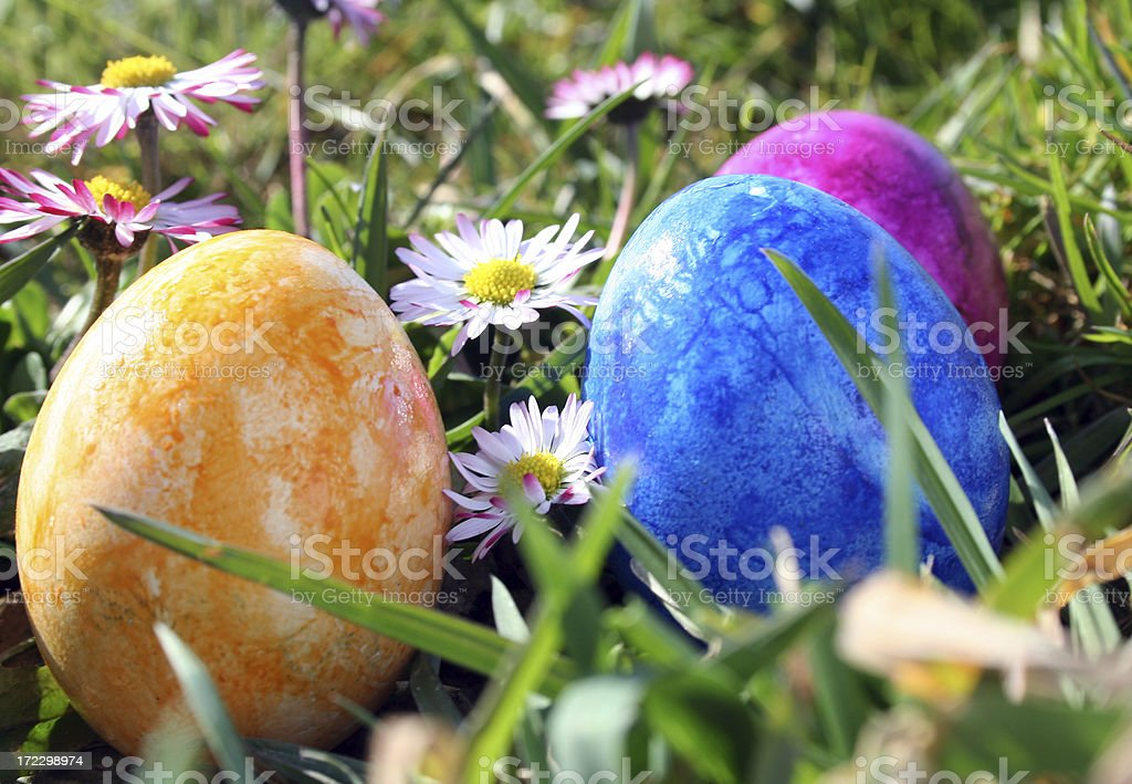 Easter Eggs Easter Eggs in sunny flower meadow. See other easter photo .. Blue Stock Photo