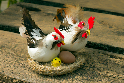 Chickens for decorating Easter eggs and egg