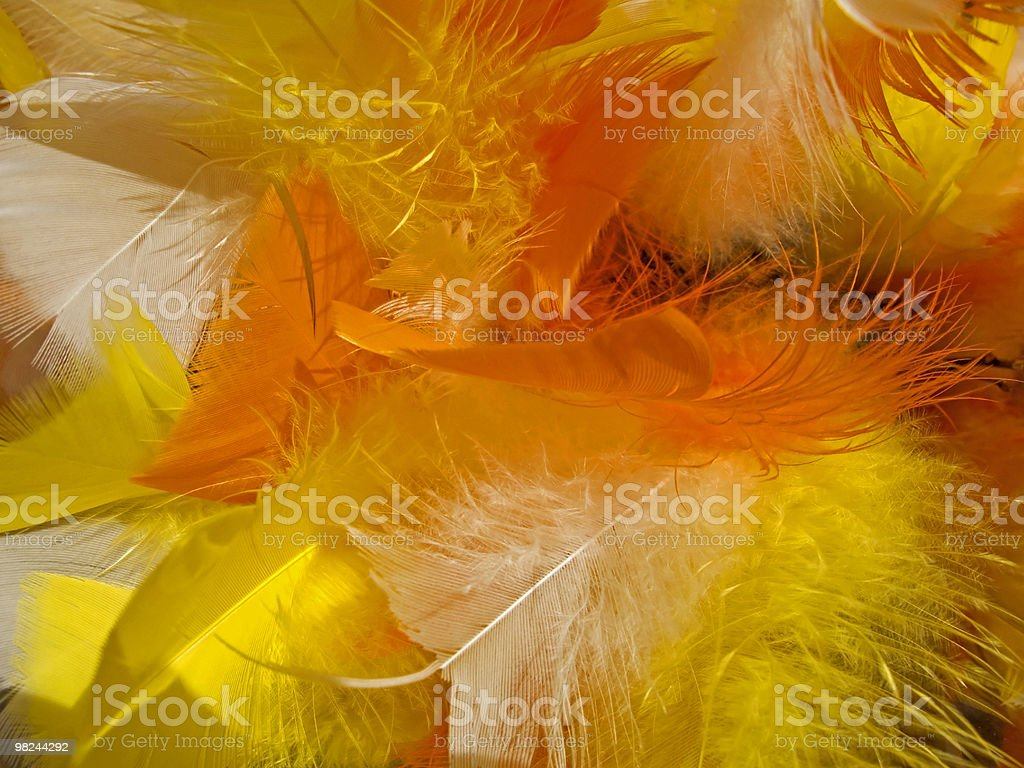 Easter feathers royalty-free stock photo