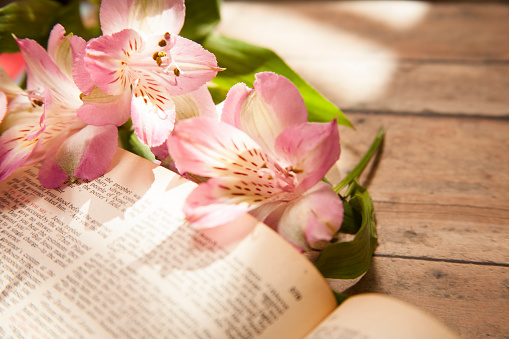 Easter.  Pink Alstroemeria flowers lie on top of an open Christian Bible.  The Bible is open to the passage in the New Testament book of Matthew about Jesus' death and resurrection. The items lie on top of a wooden table.  Devotional, prayer, Easter themes.