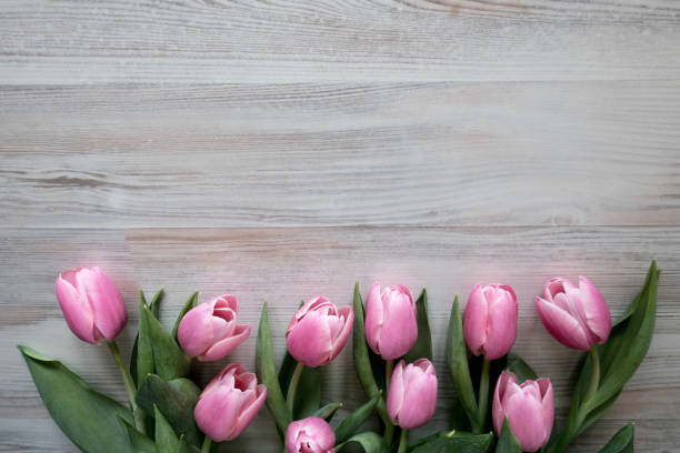 Easter frame of pink tulips on wooden background picture id1135910983?b=1&k=6&m=1135910983&s=612x612&w=0&h=xuysqtoppo ohyiak ozisaybr1isch ytnnso euy0=