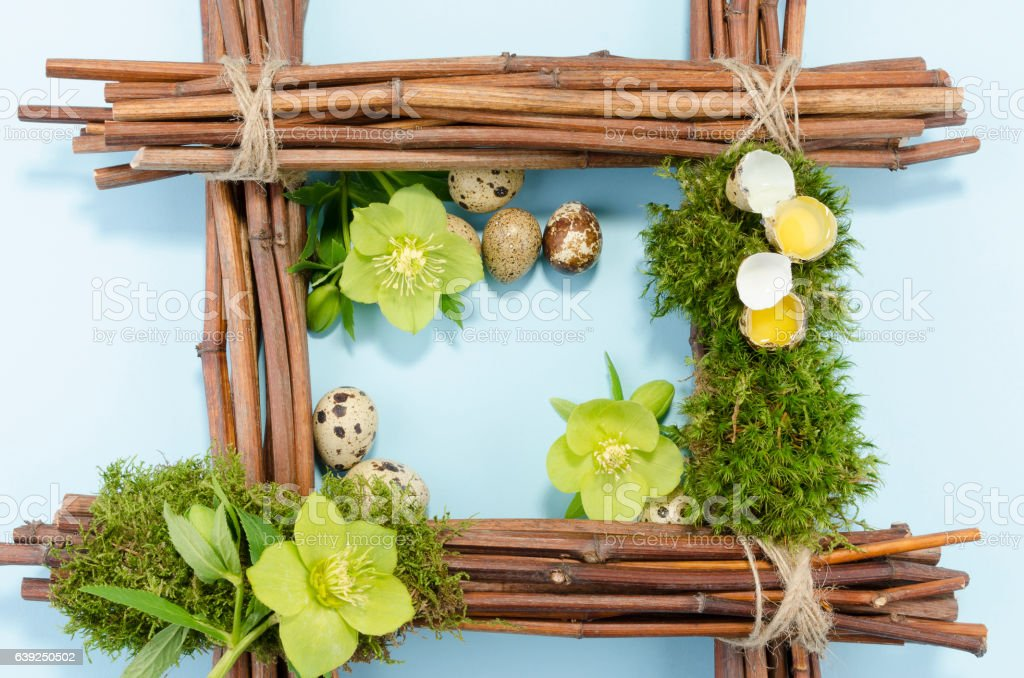 Easter frame with two raw and seven boiled quail eggs stock photo