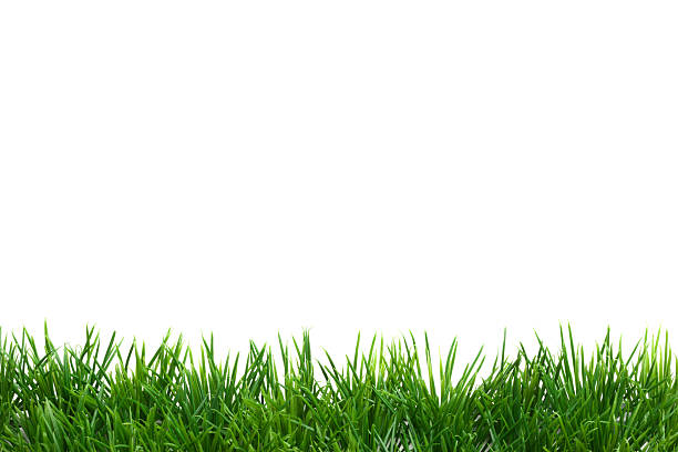 easter grass border, isolated on white - çim stok fotoğraflar ve resimler