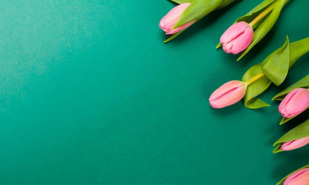 Ostergrüner Hintergrund mit rosafarbenen Tulpenblüten – Foto