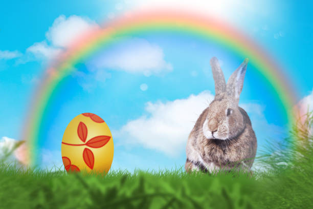 Easter greeting card with a cute easter rabbit in the grass picture id1131410346?b=1&k=6&m=1131410346&s=612x612&w=0&h=ggwdq0pvqo3fiauajehigh1r njeuw7x puecow2uua=