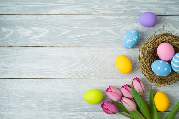Easter holiday background with easter eggs in bird nest and tulip flowers on wooden table stock photo
