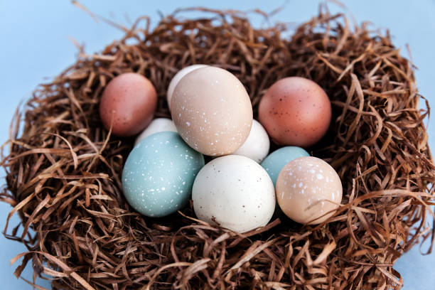 Easter holiday colorful eggs in the nest for traditional celebration, closeup of spring decoration stock photo