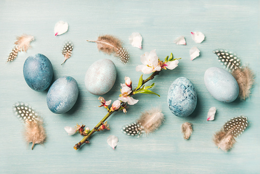 Easter holiday greeting card. Flat-lay of colored eggs with tender Spring almond blossom flowers and feathers over light blue background, top view.