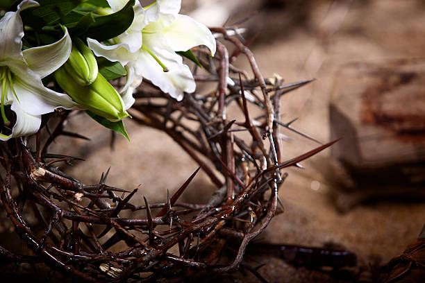 easter holiday passion lily - thorn stock photos and pictures