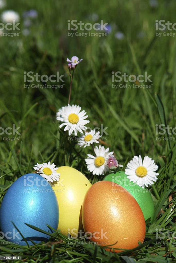 easter hunt eggs in meadow royalty-free stock photo