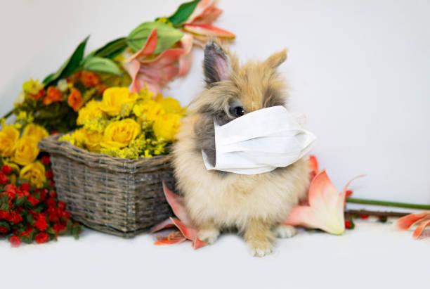 Easter In Times Of Coronavirus stock photo