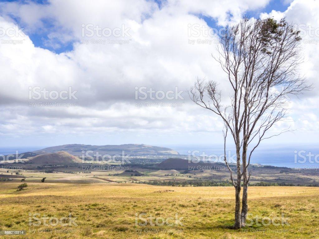 Easter Island Trees stock photo