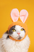 An adorable portrait of a white and gray longhair cat wearing bunny ears.