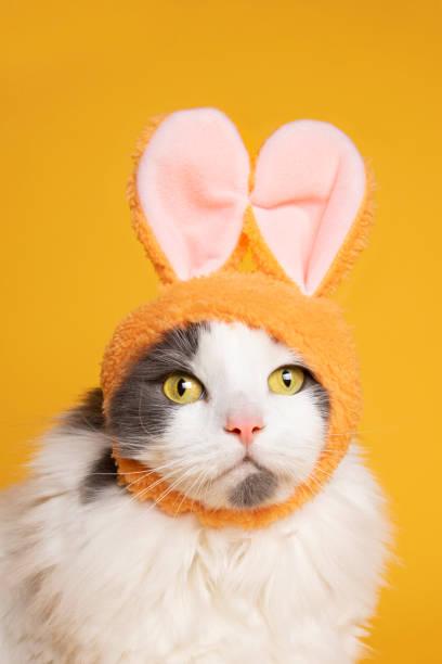 Easter Kitty on Yellow stock photo