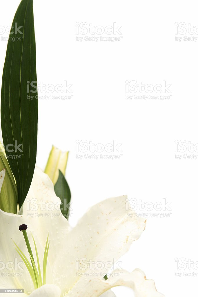 Easter lilies royalty-free stock photo
