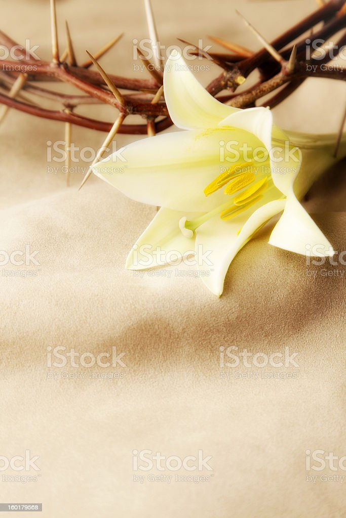 Easter Lily and Crown of Thorns royalty-free stock photo