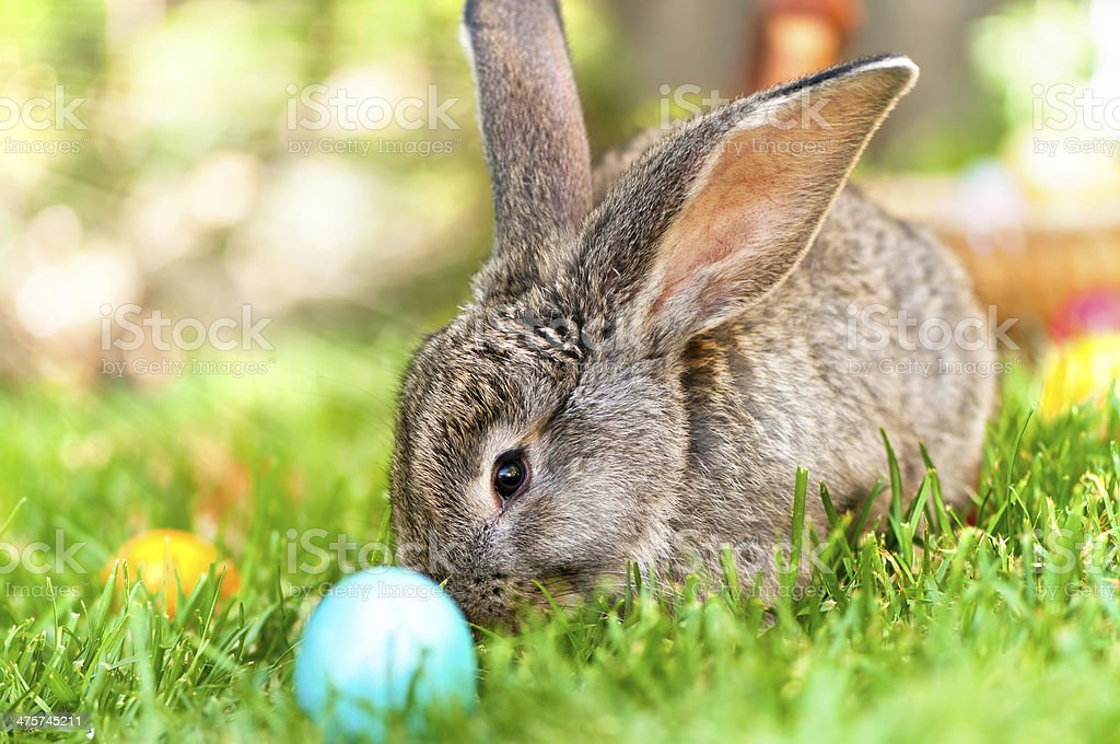 Easter little rabbit smiling in green grass with leaves stock photo