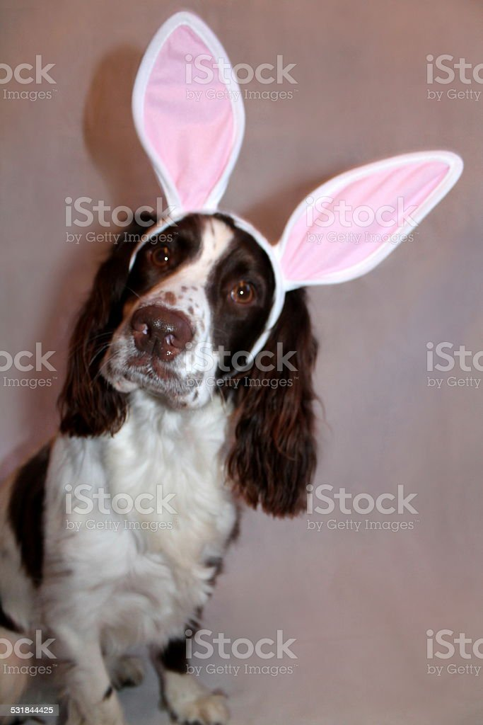 Easter Manny stock photo