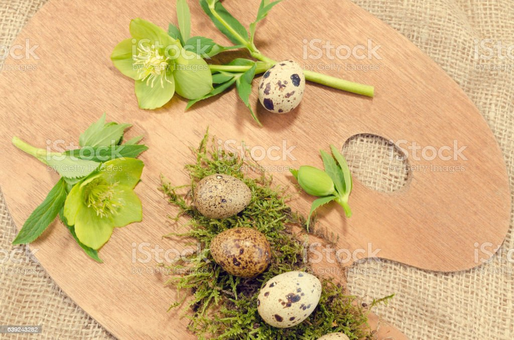 Easter palette with quail eggs and hellebore close up stock photo