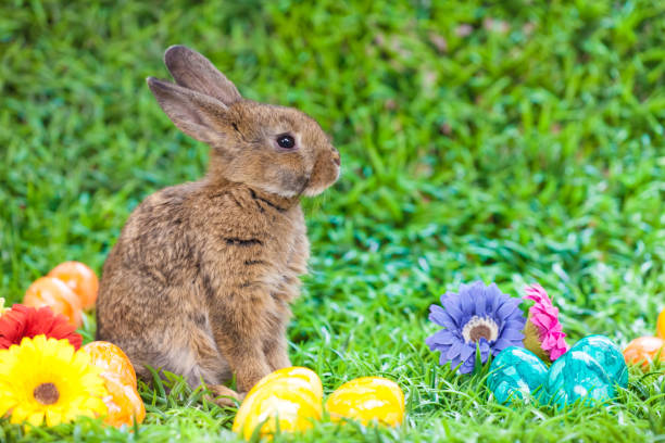 easter - easter bunny stock photos and pictures