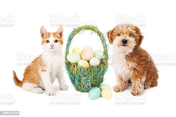 Easter puppy dog and kitten picture id468054038?b=1&k=6&m=468054038&s=612x612&h=1jyrkhhyrrcqdm0h8pmrxbabxvd6yonaokwzu h1v4i=