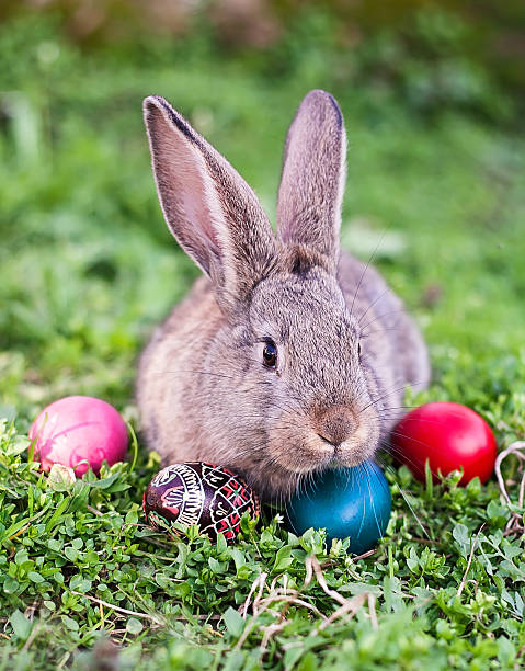 Easter rabbit and Easter eggs stock photo